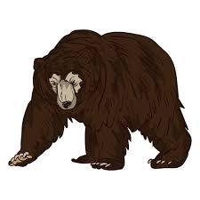 imagenes animadas oso dibujos animados anciano de oso pardo descargar png svg transparente