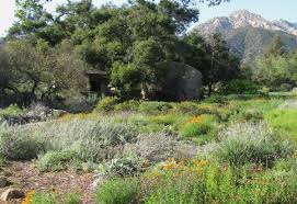landscaping with california natives