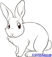sketches for bunny rabbit sketches www sketchesxo com