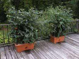 2011 star customers the garden patch growbox