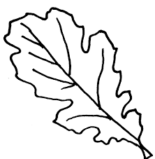 oak leaves coloring pages clipart library free clipart images