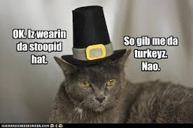 top 5 thanksgiving lolcats thanksgiving cat pictures
