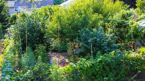 backyard permaculture food forest functional design youtube
