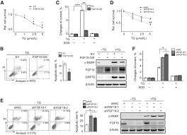 fgf19 protects hepatocellular carcinoma cells against endoplasmic