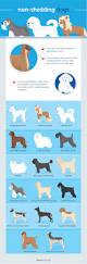 Do All Short Haired Dogs Shed by Why Do Dogs Shed Dr Justine Lee Dacvecc America U0027s