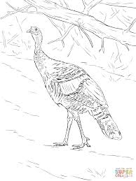 wild turkey coloring page kids coloring
