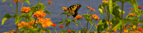 events calendar see current u0026 upcoming events callaway resort