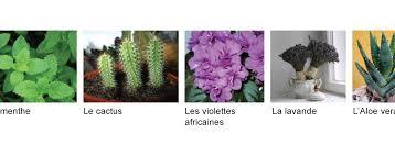 plante d駱olluante chambre 5 plantes pour purifier votre chambre cheminement