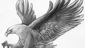 pencil drawing of a bird pencil drawing of a bird most likely a