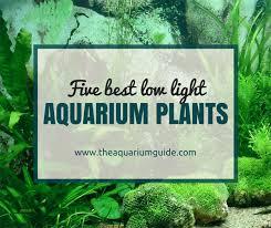 good low light plants 5 best low light aquarium plants the aquarium guide