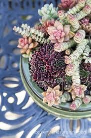 99 best succulent garden inspiration images on pinterest