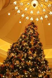 Orange And Brown Christmas Tree Decorations by Pictures Of Decorated Christmas Trees