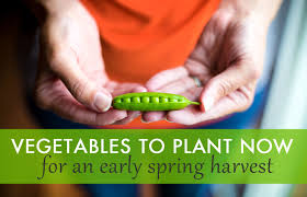 10 vegetables to plant now for a bountiful spring harvest