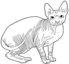 cat color pages printable shop safe secure
