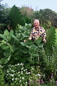 caes newswire giant milkweed