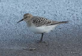 Ohio Birds images Rare birds arriving in waves to northeast ohio just in time for jpg