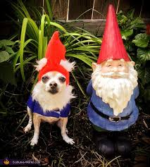 Chihuahua Halloween Costume Garden Gnome Costume Gnome Costume Costume Works Halloween