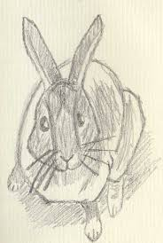 pencil sketch of rabbit by rabbitandcoyote on deviantart