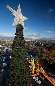 100ft cheshire oaks tree complete with 100 000