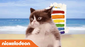 grumpy cat dances to u0027cake by the ocean u0027 by dnce youtube