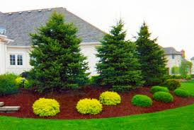 Bushes For Landscaping Shrubs For Sale Lowest Prices Fast Shipping