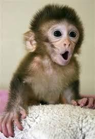 Baby Monkey Meme - surprised baby monkey blank template imgflip