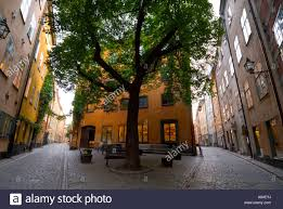 tree in front of building in gamla stan the town of stockholm