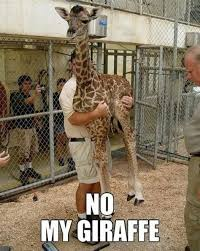 Drunk Giraffe Meme - th id oip mu1lpmw3kv yx0qzi4hgbghajs