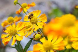 plants for late summer colour gardenersworld com