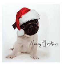 pug puppy card at www ilovepugs co uk post worldwide