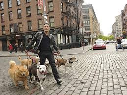 cbs unveils dogs in the city with justin silver cbs san francisco