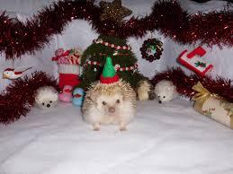 christmas contest 2016 carolina storm hedgehogs
