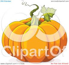 pumpkin cartoon pic cartoon of a twirling vine on an autumn pumpkin royalty free