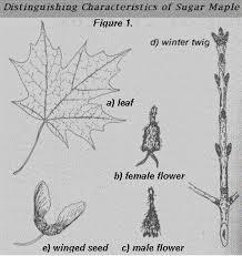 25 best tree identification images on tree