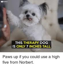 High Dog Meme - 25 best memes about paws up paws up memes