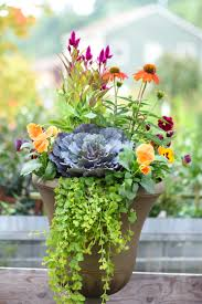 creating containers for fall and winter merrifield garden center