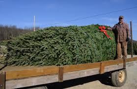 Washington Christmas Tree Farms - lehighton tree farm supplying white house christmas tree times