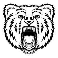 drawn bear face pencil color drawn bear face