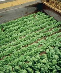 Types Of Vegetables To Grow In A Garden - cold frame gardening vegetable gardener