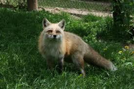 Michigan wildlife images Wild wonders wildlife park howell nature center heal grow be jpg