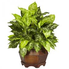 silk plants variegated dieffenbachia w large hexagon silk plant