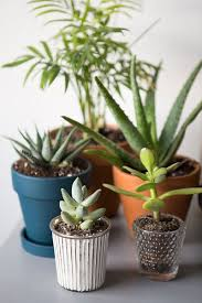 Home Interior Plants by Cactus Kakteen Fr Den Mini Cacti Styling A Desk Urban Jungle