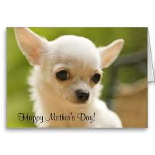783 best mothers day greeting cards images on greeting