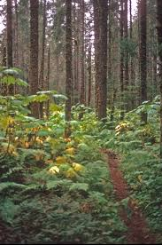 Alaska forest images Alaskakids jpg