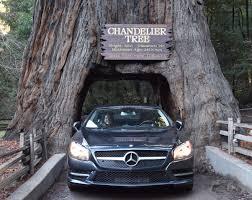 Chandelier Tree California California S Pioneer Cabin Tree Aka Tunnel Tree Has Fallen