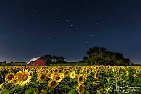 Photographing Sunflowers In Kansas Mike Jensen Photography