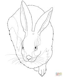 321 bunny rabbit coloring images bunny