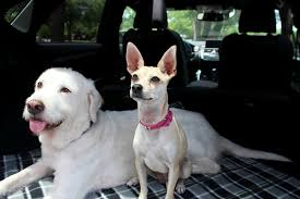 Canine Creature Comforts Dog Friendly Features Of The 2017 Lexus Nx By Sherri Tilley