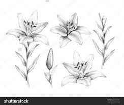 floral pencil drawings drawing time lapse a simple floral design