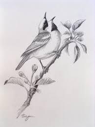 bird pencil drawings google zoeken kleurplaten pinterest